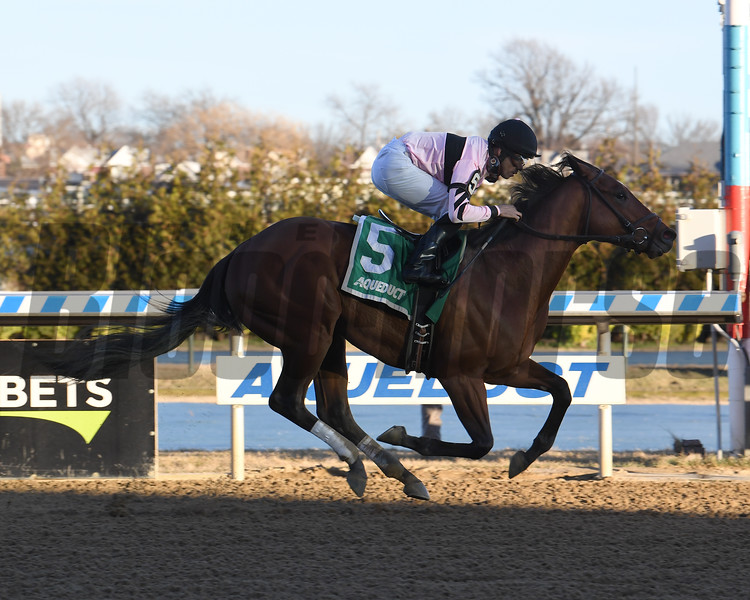Scilly Cay wins the 2020 Rego Park Stakes at Aqueduct. Photo: Coglianese Photos/Susie Raisher