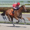 Center Aisle wins a maiden special weight Sunday, March 29, 2020 at Gulfstream Park. Photo: Coglianese Photos/Ryan Thompson