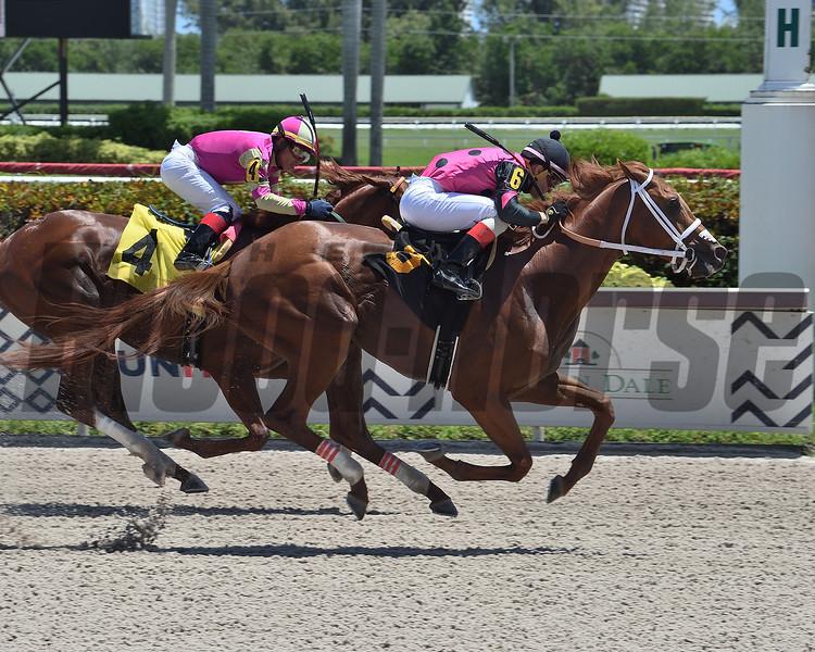 El Samuro wins maiden special weight Sunday, August 16, 2020 at Gulfstream Park. Photo: Coglianese Photos/Lauren King