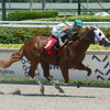 Tiger wins maiden special weight Sunday, August 9, 2020 at Gulfstream Park. Photo: Coglianese Photos/Ryan Thompson