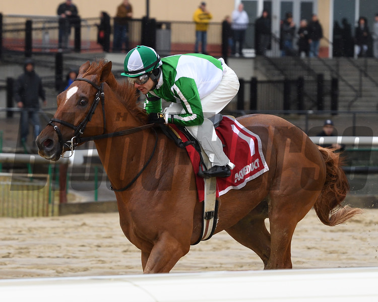 Mr. Buff wins the 2020 Jazil Stakes at Aqueduct<br /> Coglianese Photos/Joe Labozzetta