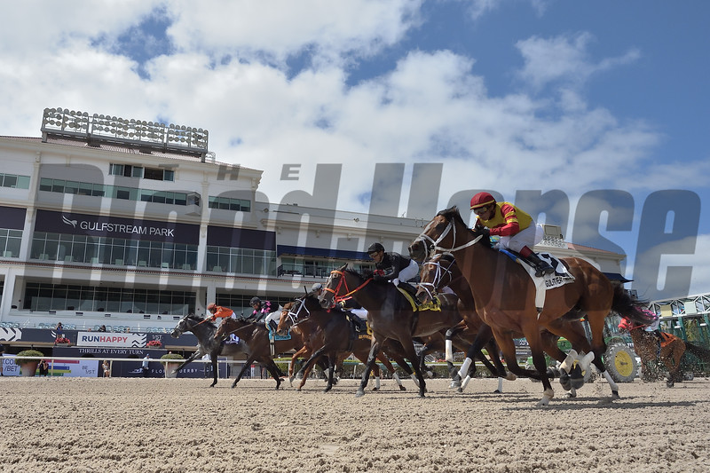 Identifier wins the 2020 Hal's Hope Stakes at Gulfstream Park. Photo: Coglianese Photos/Lauren King
