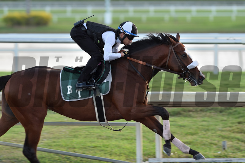 Tiz the Law - Morning - Gulfstream Park - 011920. Photo: Coglianese Photos/Lauren King