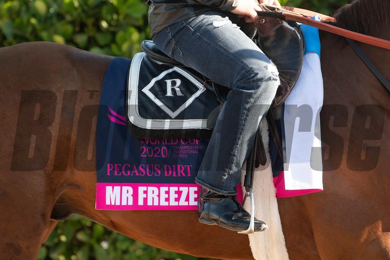 Mr Freeze - Gulfstream Park, January 21, 2020<br /> Joe DiOrio Photo