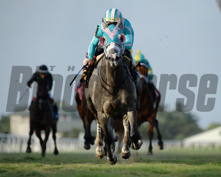 Tusk wins the 2020 Tropical Turf Stakes at Gulfstream Park<br /> Coglianese Photos/Ryan Thompson
