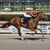 W W Fitzy - AOC, Gulfstream Park, April 3, 2020   <br /> Coglianese Photos/Lauren King