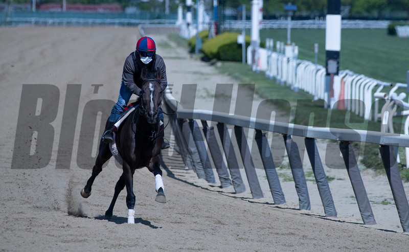 A horse gallops on the main track at Belmont Park Wednesday, May 20, 2020 in Elmont, N.Y. with the exercise rider using a face mask in compliance with the safety protocols at the New York tracks. Photo by Skip Dickstein