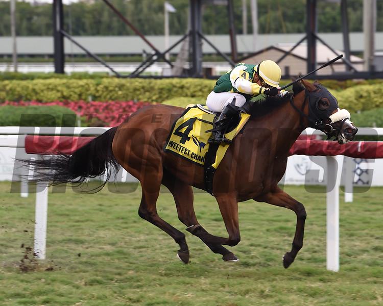 Cheermeister wins 2020 Sweetest Chant Stakes at Gulfstream Park. Photo: Coglianese Photos
