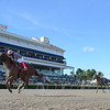 Shivaree wins the 2020 Limehouse Stakes at Gulfstream Park<br /> Coglianese Photos/Lauren King