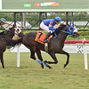 Omaha City wins the 2020 Hollywood Beach Stakes at Gulfstream Park<br /> Coglianese Photos/Lauren King