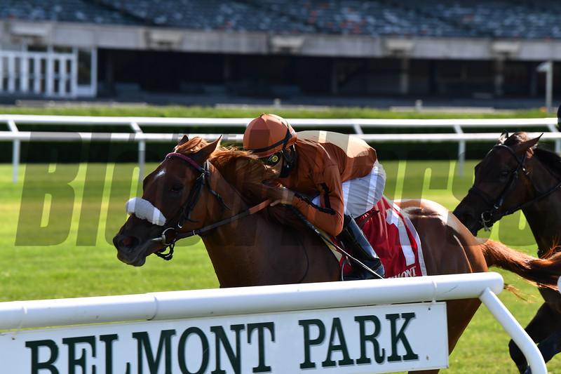 Bredenbury wins the Lady Shipman Stakes Sunday, June 21, 2020 at Belmont Park. Photo: Coglianese Photos/Joe Labozzetta