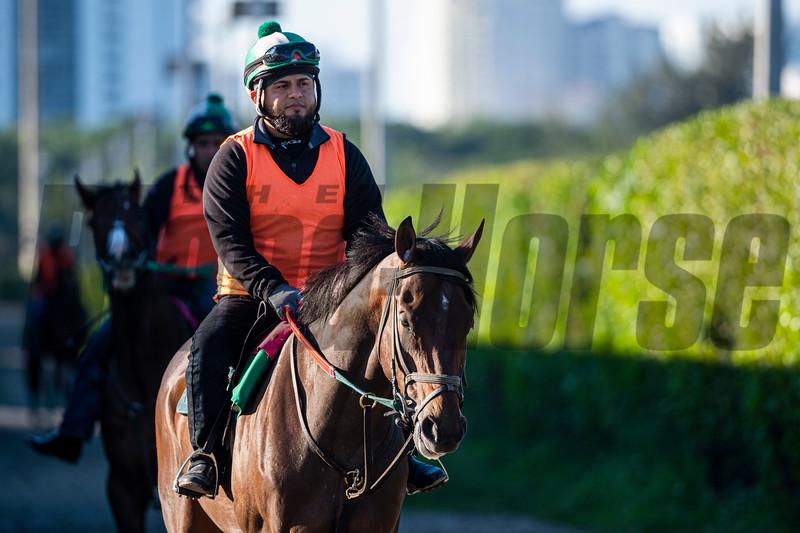 iam's Lucky Charm  @ Gulfstream Park Feb 28 2020<br /> ©Joe DiOrio/Winningimages.biz