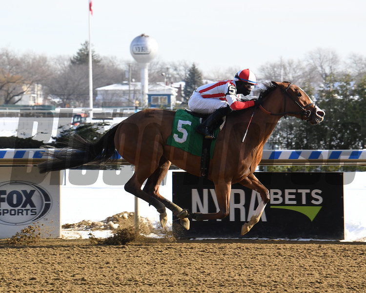 Risk Model wins maiden special weight Saturday, December 19, 2020 at Aqueduct. Photo: Coglianese Photos
