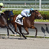 Willy Boi - Maiden win, Gulfstream Park, December 10, 2020<br /> Coglianese Photos/Ryan Thompson