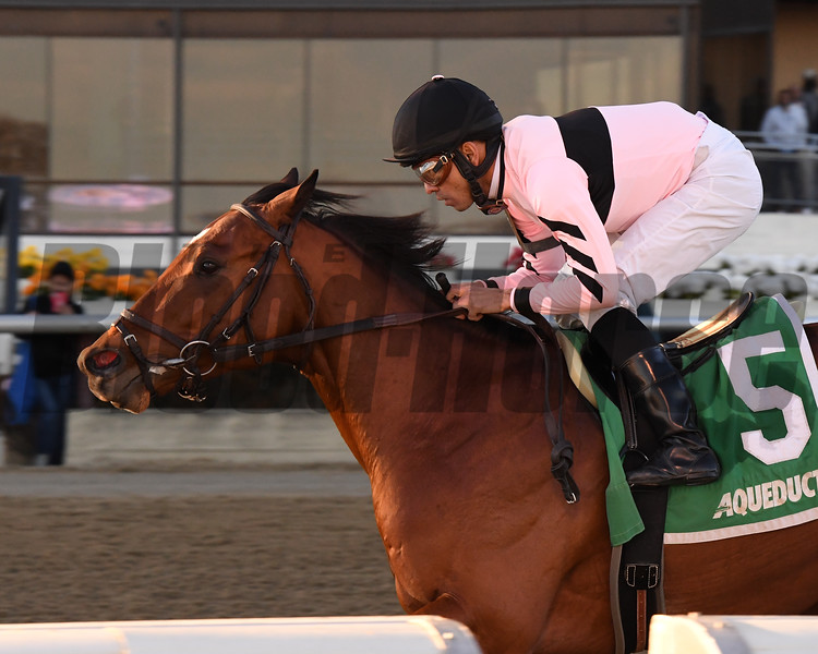Scilly Cay wins the 2020 Rego Park Stakes at Aqueduct. Photo: Coglianese Photos