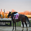 True Timber wins the 2020 Cigar Mile at Aqueduct<br /> Coglianese Photos/Janet Garaguso