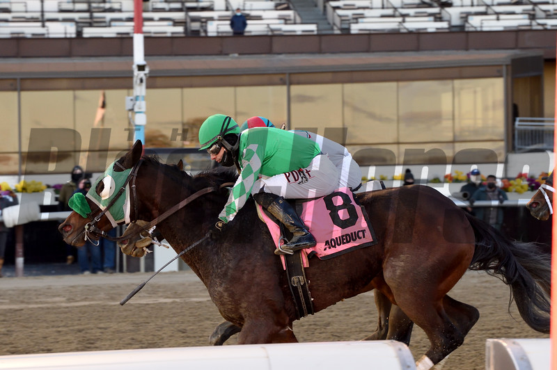 Hold the Salsa wins the New York Stallion Series Stakes Sunday, December 6, 2020 at Aqueduct. Photo: Coglianese Photos/Chelsea Durand