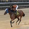 Honor Way wins the Pumpkin Pie Stakes Sunday, November 1, 2020 at Belmont Park. Photo: Coglianese Photos/Chelsea Durand