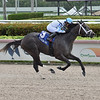 Up in Smoke wins the 2020 Game Face Stakes at Gulfstream Park<br /> Coglianese Photos/Lauren King