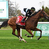 Tamahere wins the 2020 Sands Point Stakes at Belmont Park<br /> Coglianese Photos/Janet Garaguso