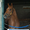 Caption: Monomoy Girl<br /> at Keeneland on May 2, 2020 Keeneland in Lexington, KY.