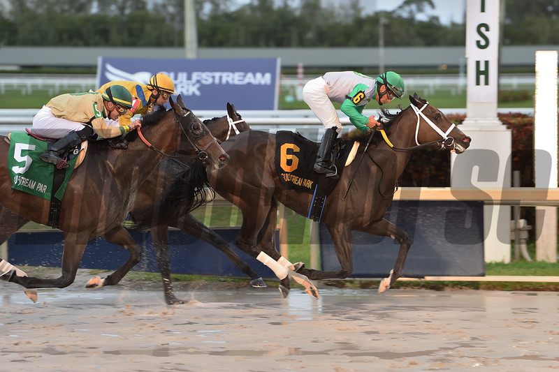 Cookie Dough wins the 2020 Royal Delta Stakes at Gulfstream Park<br /> Coglianese Photos/Lauren King