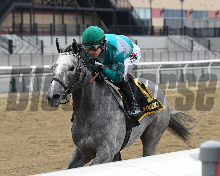 Harvey's Lil Goil wins the 2020 Busanda Stakes at Aqueduct. Photo: Coglianese Photos/Elsa Lorieul