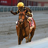 True Timber wins the 2020 Cigar Mile at Aqueduct<br /> Coglianese Photos/Joe Labozzetta