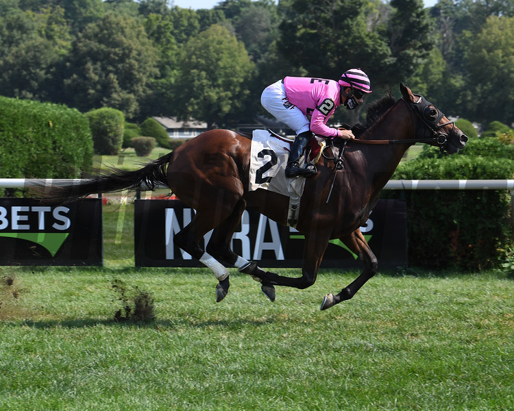 No Salt wins a maiden claiming race Sunday, August 23, 2020 at Saratoga Race Course. Photo: Coglianese Photos
