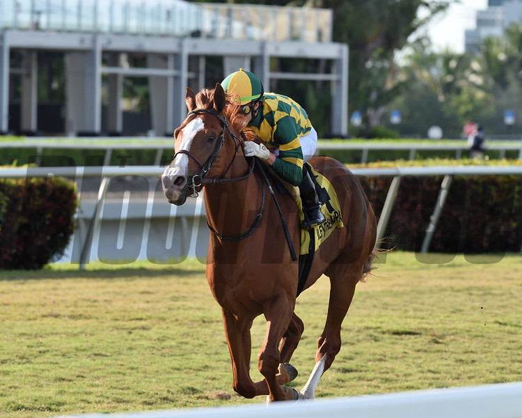 Gufo wins the 2020 English Channel Stakes at Gulfstream Park<br /> Coglianese Photos/Ryan Thompson