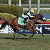 Cheermeister wins the 2020 Herecomesthebride Stakes at Gulfstream Park     <br /> Coglianese Photos