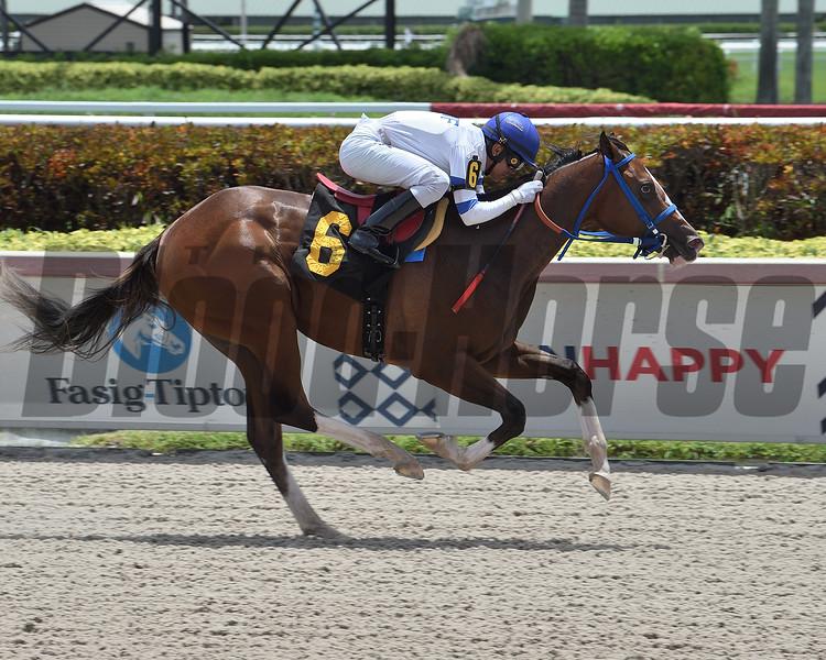 Royal Habibi wins a maiden claiming race June 28, 2020 at Gulfstream Park. Photo: Coglianese Photos/Lauren King