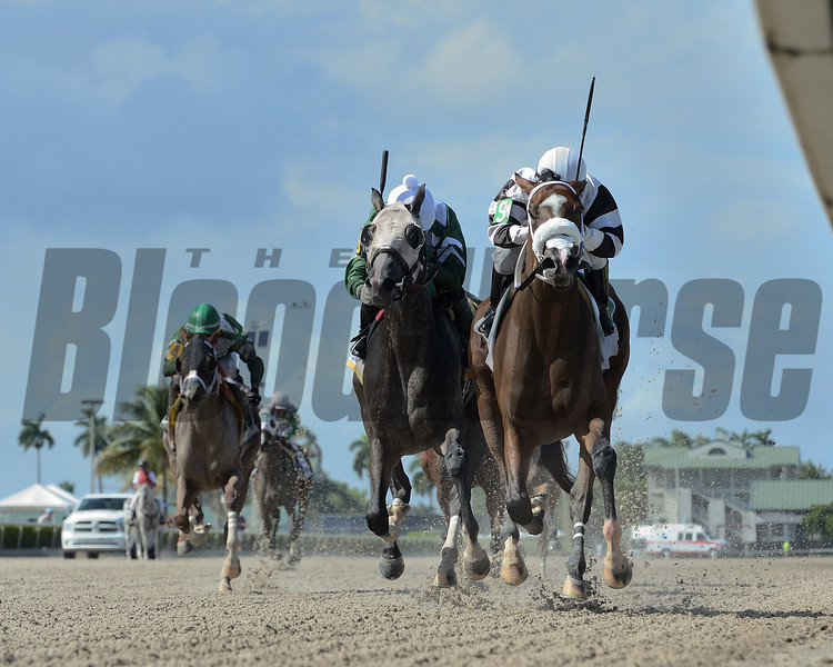 Princess Secret wins the 2020 FTBOA Florida Sire Susan's Girl Stakes<br /> Coglianese Photos/Lauren King