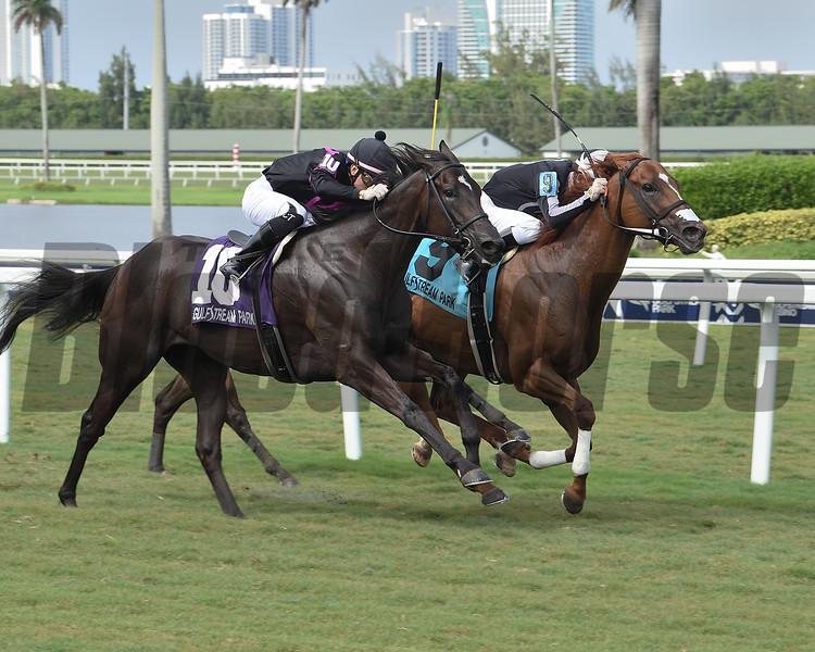 Pay Any Price wins the Bob Umphrey Turf Sprint Stakes Sunday, July 5, 2020 at Gulfstream Park. Photo: Coglianese Photos/Lauren King