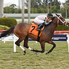 Aerodynamic - Maiden Win, Gulfstream Park, March 11, 2020<br /> Coglianese Photos/Lauren King