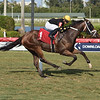Temple - AOC, Gulfstream Park, April 23, 2020<br /> Coglianese Photos/Lauren King