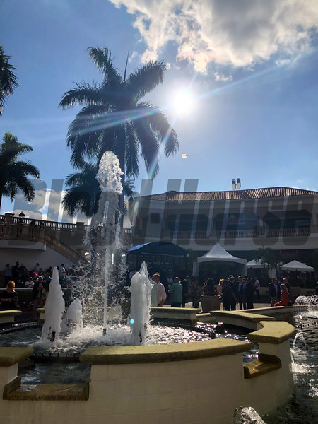 Pegasus World Cup Scenics 2020 Gulfstream Park. Photo: Photos by Z