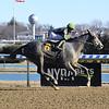 Ice Princess wins an allowance optional claiming race January 20, 2020 at Aqueduct Racetrack. Photo: Coglianese Photos
