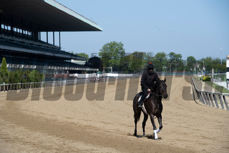 """A horse trained by Claude R. """"Shug' McGaughey III jogs on the main track at Belmont Park Wednesday, May 20, 2020 in Elmont, N.Y. with the exercise rider using a face mask in compliance with the safety protocols at the New York tracks. Photo by Skip Dickstein"""