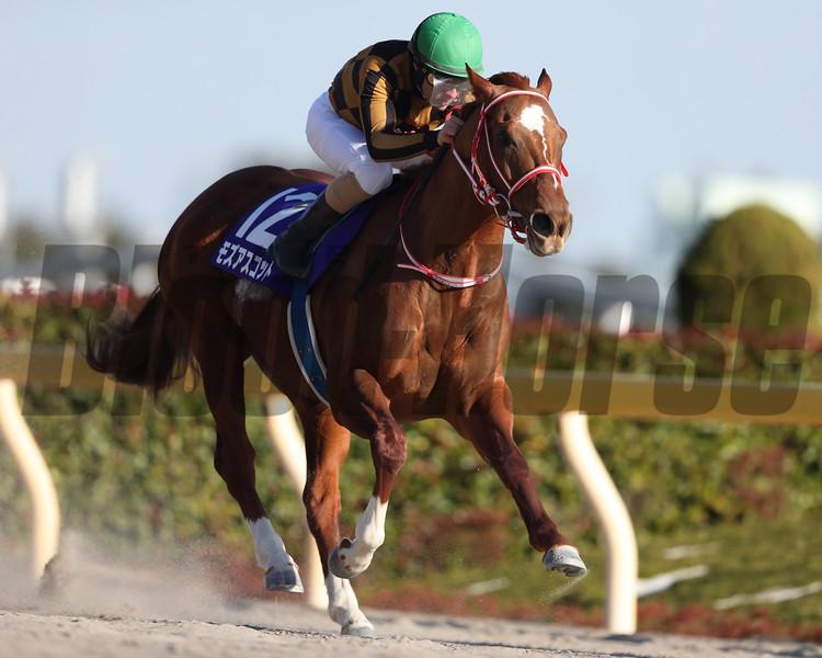 Mozu Ascot wins the 2020 February Stakes at Tokyo Racecourse. Photo: Masakazu Takahashi