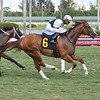 Maniacal - AOC, Gulfstream Park, March 27, 2020<br /> Coglianese Photos/Lauren King