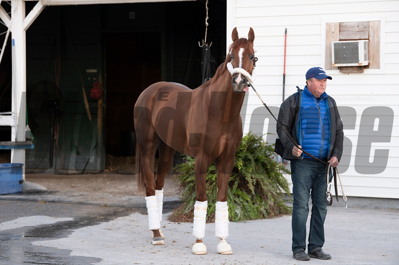 Mucho Gusto the day after winning the Pegasus World Cup Invitational at Gulfstream Park. Photo: Joe DiOrio