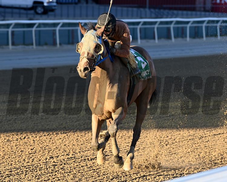 Honor Way wins the Garland of Roses Stakes Sunday, December 6, 2020 at Aqueduct. Photo: Coglianese Photos/Joe Labozzetta