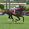Social Exclusion - Maiden Win, Gulfstream Park, July 1, 2020 First winner for Social Inclusion<br /> Coglianese Photos/Lauren King
