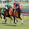Coin the Phrase - Maiden Win, Gulfstream Park, December 2, 2020<br /> First race of the Meet<br /> Coglianese Photos/Derbe Glass