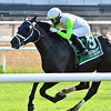 Social Paranoia wins the 2020 Poker Stakes at Belmont Park<br /> Coglianese Photos/Joe Labozzetta