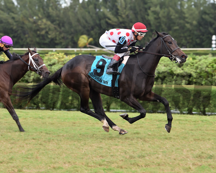 Inthewinnerscircle wins the Juvenile Fillies Turf Stakes Saturday, November 21, 2020 at Gulfstream Park West. Photo: Coglianese Photos/Lauren King