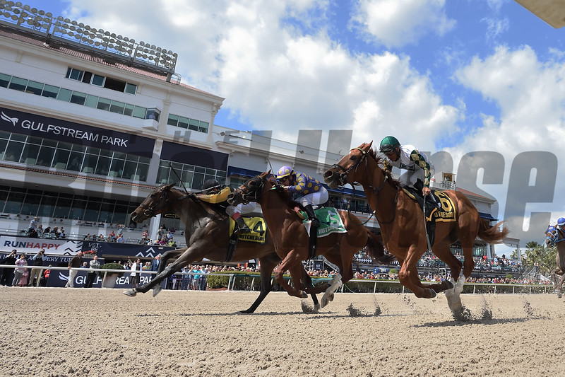 With Verve wins 2020 Hutcheson Stakes at Gulfstream Park. Photo: Coglianese Photos