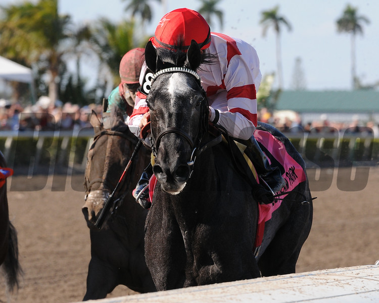 Unrivaled Belle wins the 2010 Rampart Stakes at Gulfstream Park with Kent Desormeaux aboard. <br /> Coglianese Photos/Eleanor Gustafson