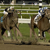 Photo by Skip Dickstein INVASOR wins The Whitney at Saratoga Race Course August 5, 2006.<br /> ©2006Skip Dickstein<br /> HORSE_OF_THE_YEAR_2006